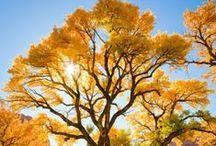 Autumn Celebrations / by **Heidi M