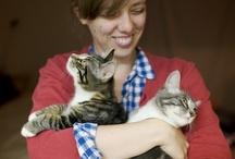 kitties / by Amy T Schubert