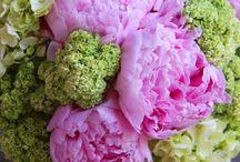 Garden and Flowers / by Cheryl Cruickshank