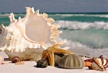 Seashell Crafts / by Michele Bonotto