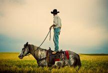 horses horses horses / ride on