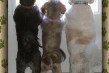 My Kinda dogs  / by Angela Gibbs