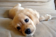Puppies :D / by Sam Davis