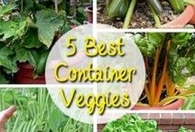 Organic Gardening / by Susan Dian