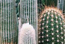 Cactus y Suculentas / CACTUS Y SUCULENTAS