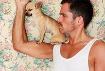 C h i h u a h u a s / die kleinste und wohl beste Hunderasse der Welt