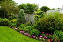 Backyard/Garden / by Andrea Vlaminck