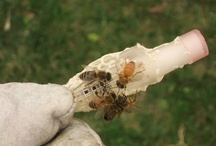 Beekeeping / by Heidi Gonzales