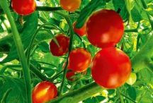 Growing fruit / Find out how to get bumper backyard crops of all your favourite fruits