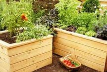 Gardening / Ideas and projects for improving maintaining your garden no matter the size
