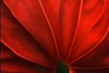01 FLOWER