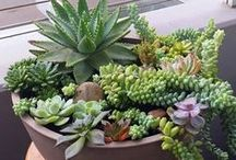 Stunning Succulents / Beautiful ways to display succulents and cacti