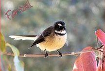 My Bird Photos