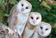owls / by Yoshiko Nakagawa