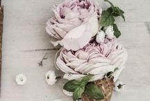 Glottogon   Flowers & Plants / Smell the roses, the peonies, the tulips and watch them bloom!