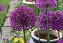 ~Gardening Delight~ / ...Garden Inspriation & Tips