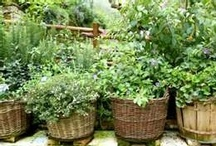 My Herb Garden / by Janice Lawson