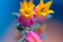 Art inspiration- Flowers / by Adriana Pelayo
