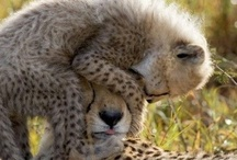 Cuddly Animal Love