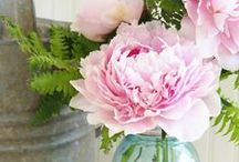 PINK PEONY COTTAGE / by Jan