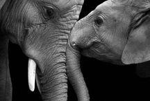 """elephants / Un'amante di """"Dumbo"""" sin da piccina, continuò ad adorare questi animali"""