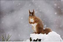 Winter and Snow fun