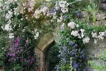 Dream Gardens / Garden Ideas