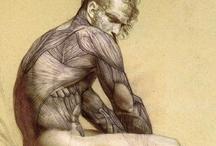 Art - study - Anatomy / by CHRISTO Philo
