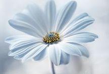 Oopsie Daisy X / Beautiful flowers X
