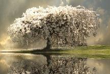 Inspired: Trees