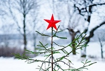 Festive / 'Tis the season!
