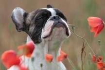 Puppy love / I am definitely a dog person! I want them ALL!