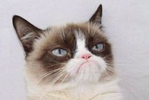 Grumpy Cat / by Kristie Large