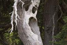 trees / by Linda Alongi Misnik
