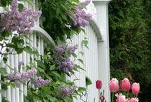Garden:  Pretty