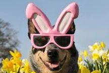 Eye On Easter