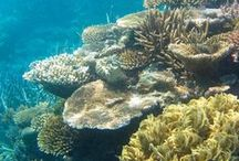 Waters to Dive / Find the best places on the planet for scuba diving.