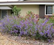 Fountain Valley, CA Lawn Makeover / This front yard in #FountainValley, (#OrangeCounty) California used to be nothing boring lawn.  With a bit of imagination and creativity it was transformed into a beautiful wildlife habitat.