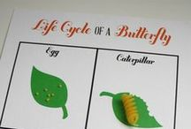 Learn About Butterflies Day 3/14/15