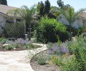 Lake Forest Birds Party Palace / Comprised various drought tolerant plant species, this garden is the talk of the town. You can't just drive by without stopping to look. This garden also features nice flagstone paths.