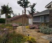 Mission Viejo Permeable drought tolerant Garden / What was once lawn and broken concrete got transformed into a sustainable, drought tolerant, permeable garden for all the local wildlife to enjoy.