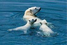 Arctic Travels