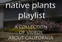 California Native Plant Videos / Videos about California native plants.  Anything and everything that you want to know about plants that are native to California.