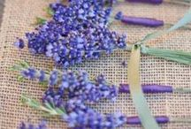 LAVENDER and so much more / Lavender has long been a favorite flower and color of genteel ladies. This shade of purple suggests refinement along with grace, elegance, and something special.  All the hues of Lavender, lilac, mauve, orchid, plum, purple, thistle.