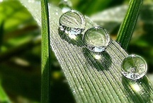 Amazing MACRO Photography / Did you every stop to watch the beauty of small drops of water? Or try and see a flower closer? Here are pins from a  macro lense that you can appreciate  up close. Enjoy...