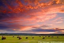 America the Beautiful / by Win-Win Farm