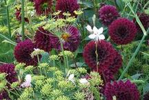 garden / stuff for the garden