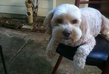 Buddy / My Dog / by Jimmy Brown