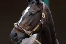 Legendary Horses / Legacy of Legendary Horses / by Carmen Hansen Schwitzer