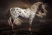Equine Art / by Carmen Hansen Schwitzer